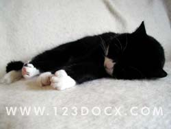 Kitten Sleeping Photo Image