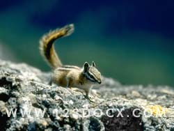 Squirrel  Photo Image