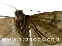 Moth Photo Image