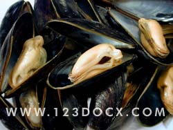 Mussels Photo Image