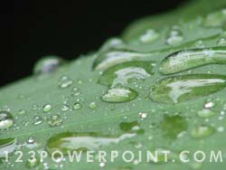 Waterdrops on Leaf Photo Image