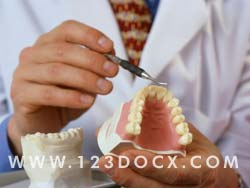 Dentist and Teeth Photo Image